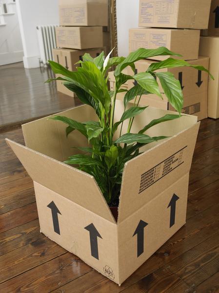 Cần lưu ý điều gì khi chuyển nhà có cây cảnh