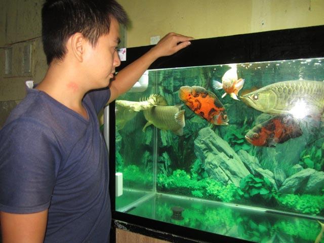 Những lưu ý khi chuyển nhà có chậu cá cảnh