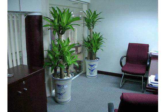 Quy trình vận chuyển và chăm sóc cây xanh khi chuyển văn phòng