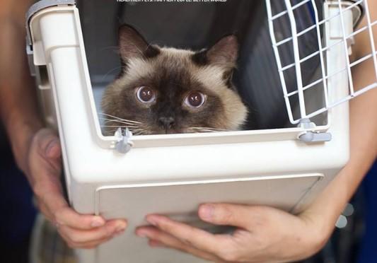 Hướng dẫn vận chuyển vật nuôi, thú cưng cho khách hàng có nhu cầu