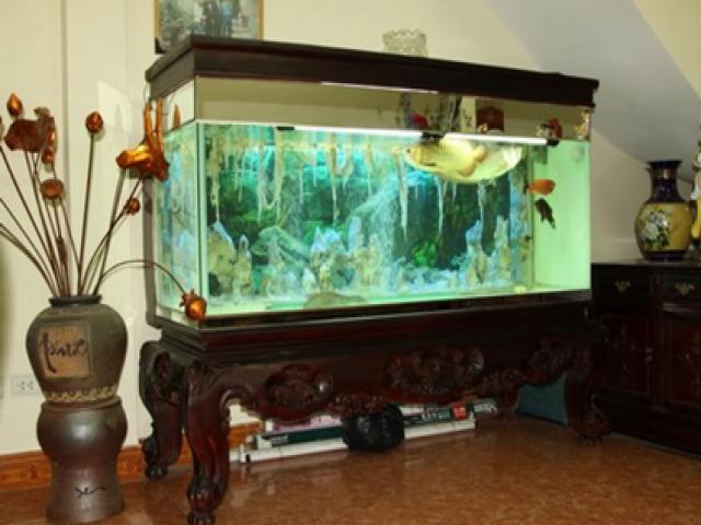 chuyển bể cá cảnh an toàn đến nhà mới