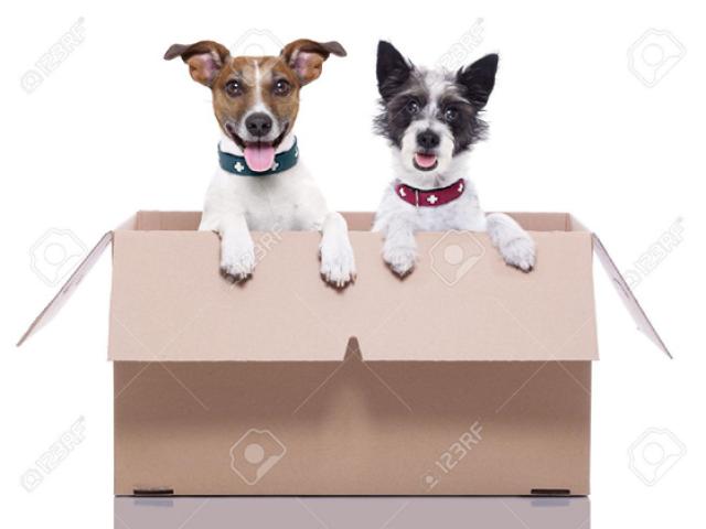 Cách chuyển nhà cùng thú cưng thích nghi tốt nhất